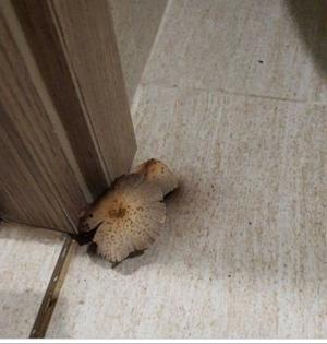 Kết luận nấm mọc trên cánh cửa của căn hộ Vinhomes Smart City liên quan đến chất lượng là thiếu cơ sở